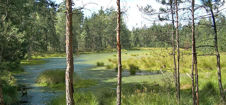 Toorfmoor im Wittingauer Becken